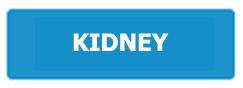 kidney.jpeg